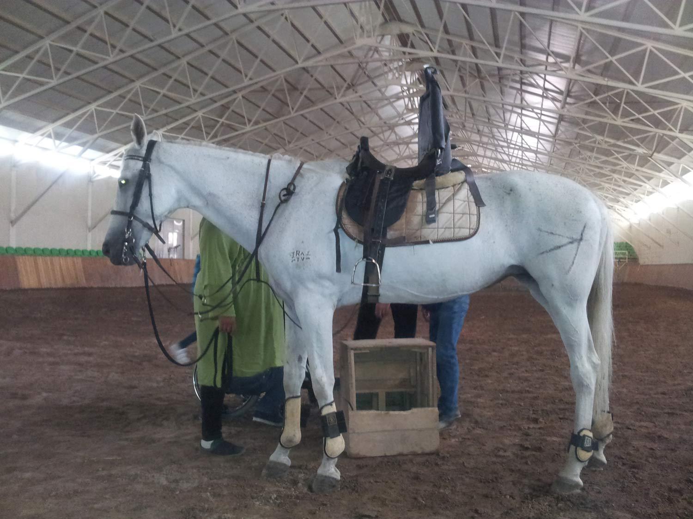 اسب سواری معلولین